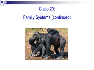 Class 20: Family Systems (continued)