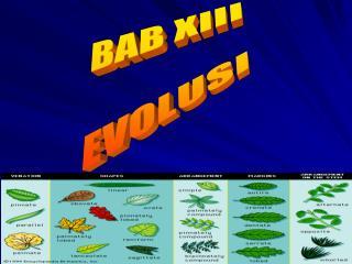 BAB XIII EVOLUSI