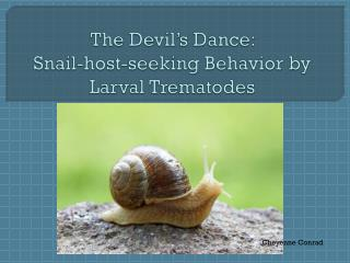 The Devil's Dance:  Snail-host-seeking Behavior by Larval Trematodes
