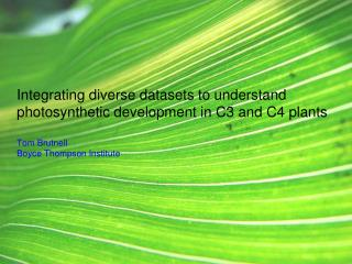 Integrating diverse datasets to understand photosynthetic development in C3 and C4 plants