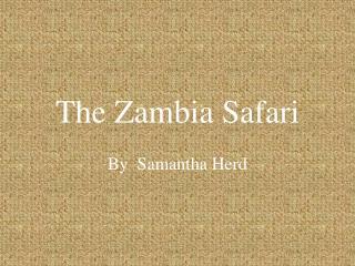 The Zambia Safari