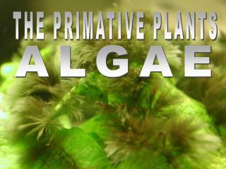 THE PRIMATIVE PLANTS