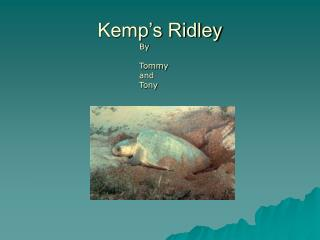 Kemp�s Ridley