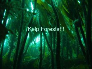 Kelp Forests!!!