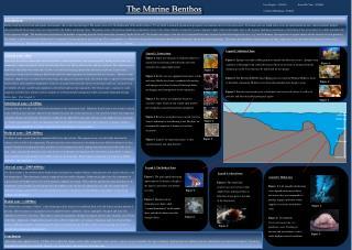 The Marine Benthos