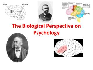 The Biological Perspective on Psychology