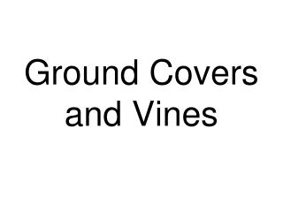 Ground Covers and Vines