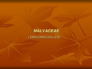 MALVACEAE ( EBEGÜMECİGİLLER)