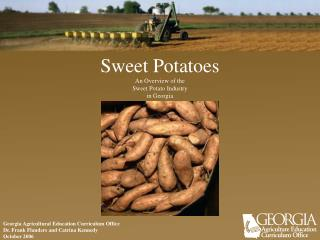 Sweet Potatoes   An Overview of the Sweet Potato Industry in Georgia