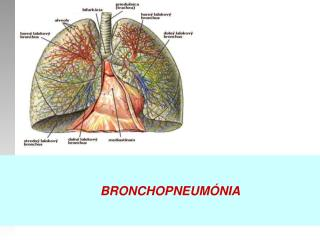 bronchopneumonia case study on Community acquired pneumonia case study - expert writers, quality services, timely delivery and other benefits can be found in our custom writing service get to know.
