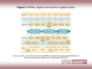 Figure 2  miRNAs, targets and functions in gastric cancer