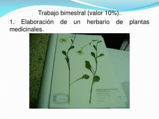 Trabajo bimestral (valor 10%). 1. Elaboración de un herbario de plantas medicinales.