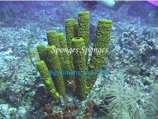 Sponges Sponges