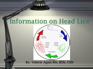 Information on Head Lice