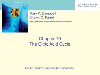 The Central Role of the Citric Acid Cycle