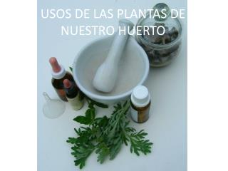 USOS DE LAS PLANTAS DE NUESTRO HUERTO
