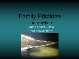 Family Pristidae The Sawfish