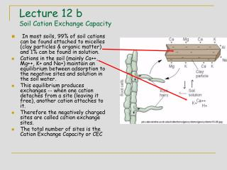 Lecture 12 b  Soil Cation Exchange Capacity