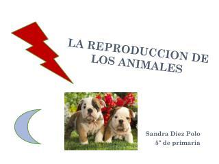 LA REPRODUCCION DE LOS ANIMALES