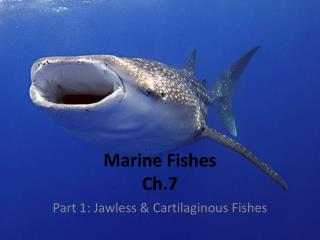 Marine Fishes Ch.7