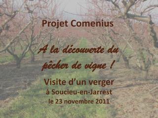 Projet Comenius