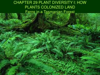 CHAPTER 29 PLANT DIVERSITY I: HOW PLANTS COLONIZED LAND Ferns in a Tasmanian Forest
