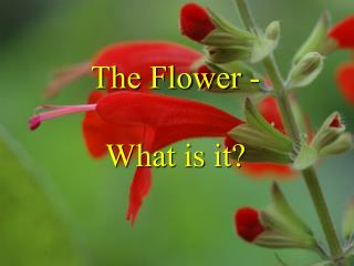 The Flower -  What is it?