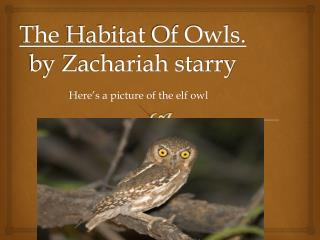 The  Habitat  Of Owls. by Zachariah starry