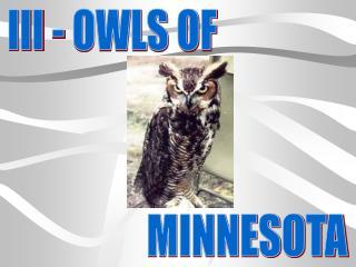 III - OWLS OF