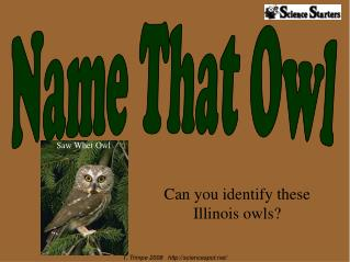 Can you identify these Illinois owls?