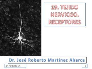 19. TEJIDO NERVIOSO.  RECEPTORES