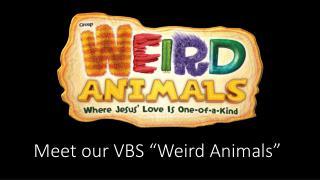 """Meet our VBS """"Weird Animals"""""""