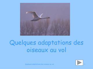 Quelques adaptations des oiseaux au vol