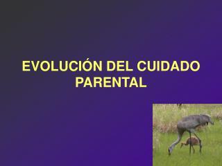 EVOLUCIÓN DEL CUIDADO PARENTAL