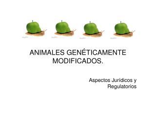 ANIMALES GEN TICAMENTE MODIFICADOS.