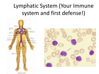Lymphatic System (Your Immune system and first defense!)