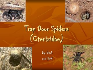 Trap Door Spiders (Ctenizidae)