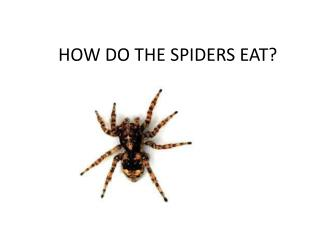 HOW DO THE SPIDERS EAT?