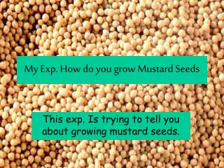 My Exp. How do you grow Mustard Seeds