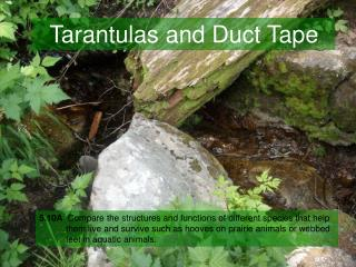 Tarantulas and Duct Tape