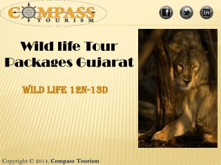 Wild life tour packages in Gujarat