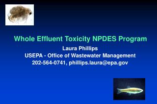 Whole Effluent Toxicity NPDES Program