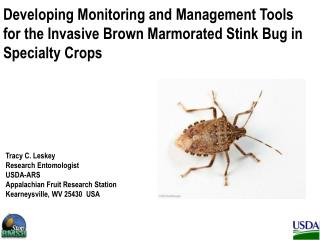 Brown Marmorated Stink Bug is an Invasive Species