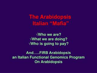 "The Arabidopsis  Italian ""Mafia"""
