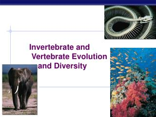 Invertebrate and      Vertebrate Evolution     and Diversity