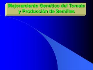Mejoramiento Gen tico del Tomate y Producci n de Semillas