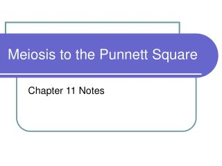Meiosis to the Punnett Square