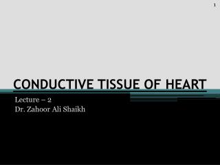CONDUCTIVE TISSUE OF HEART