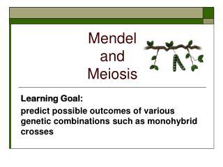 Mendel  and  Meiosis