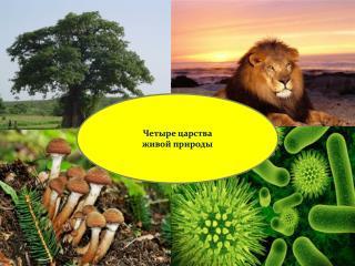 Четыре царства  ж ивой природы